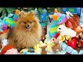 WHAT MY DOG GOT FOR CHRISTMAS | DOG TOY HAUL + GIFT WRAPPING CHAOS