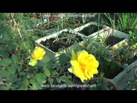 Plants Grow From Stem | Plants That Grow From Leaves | What Plants Can Be Propagated (Urdu/hindi)