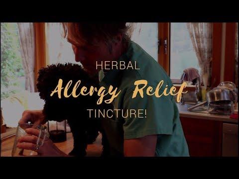 Best Herb For Dog Allergy