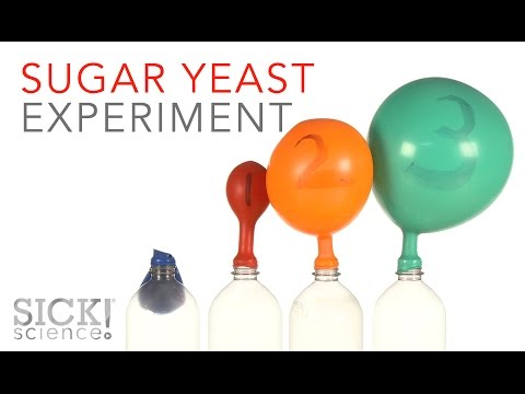 Sugar Yeast Experiment - Sick Science! #229