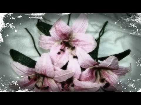 Pink Saint Joseph Lily
