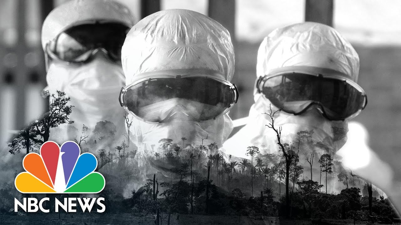 Humans To Blame For The Coronavirus? How Deforestation Gives Rise To Pandemics   Think   NBC News