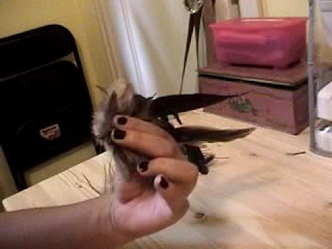 Feather Hair Clip Tutorial - Antelope Baby