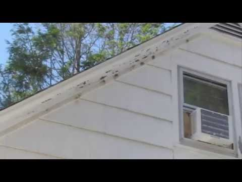 Carpenter Bees vs House