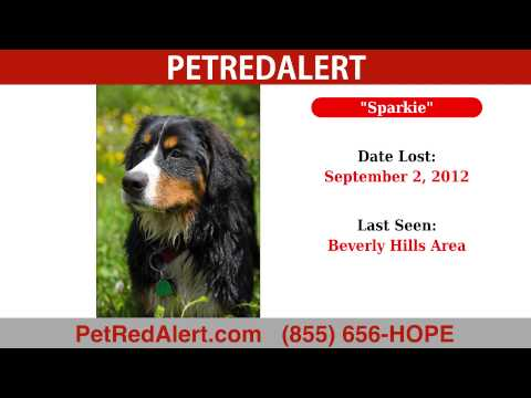 Sample Lost Pet Video Flyer