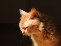 Abandoned At 17 New Beginning For An Elderly Cat