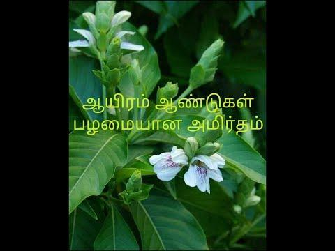 Aaduthoda illai kasayam receipe in tamil   ஆடுதொடா இலை கசாயம்   Medicinal cough syrup receipe