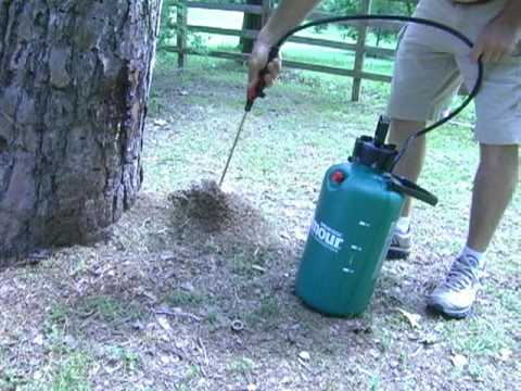 How to get rid of FireAnts