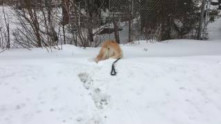 Smiley the Blind Dog - snow day
