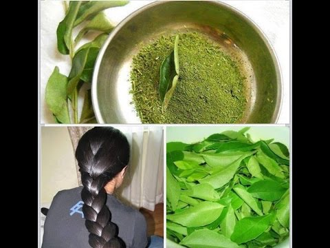 Home Remedies For Hair Growth and Thickness - Coconut Milk, Amla, Curry Leaves