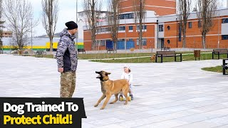 Dog Trained To Protect Baby From Potential Danger
