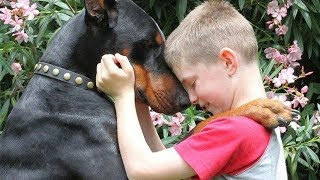 Doberman Dog Protecting Babies and Kids Compilation 2018 | NEW HD
