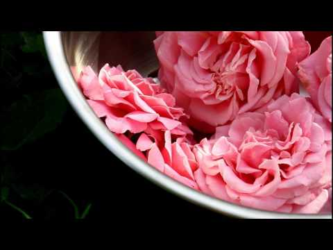 Harvesting and Drying Rose Petals Growing Flowers Cut Flower Farm Gardening for Beginners Easy Plant