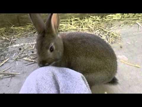 Rabbit Litter | Absorbency Test