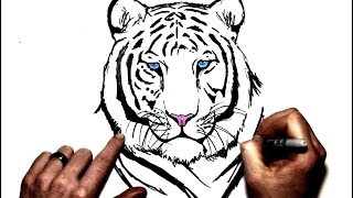 Download How to Draw a White Tiger | Step By Step Video