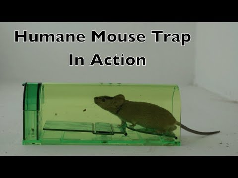Humane Mouse Trap In Action - Full Review With Real Mice & Motion Cameras