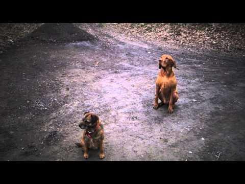 Dog Training. The Sit and Wait exercise.