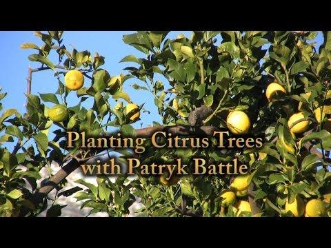Planting Citrus Trees in Sandy Soil