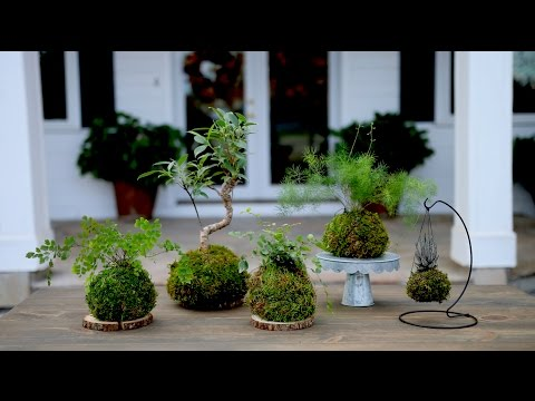 How to Make Kokedama (Full Version) // Garden Answer