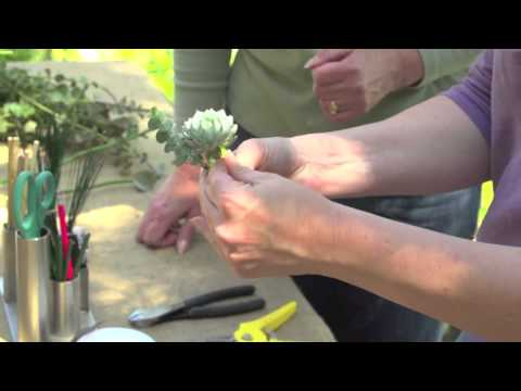 Creating a succulent corsage or boutonniere