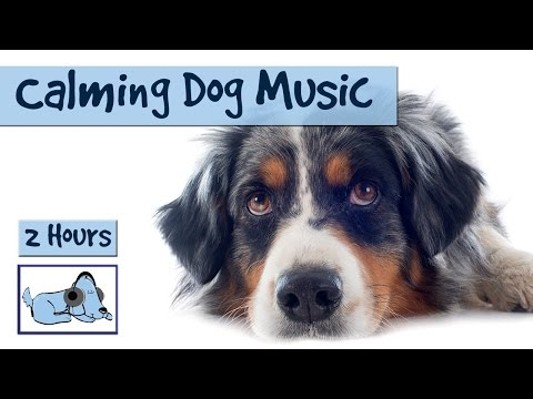 2 and a Half Hours of Calming Music for Stressed Dogs!