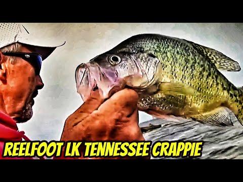 Reel Foot Lake crappie with Jackie VanCleave