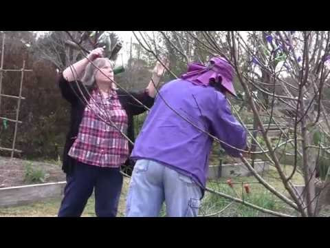 Pruning the High Density Orchard