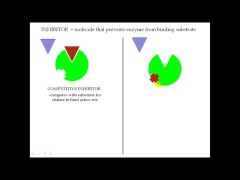 Enzyme Part 3