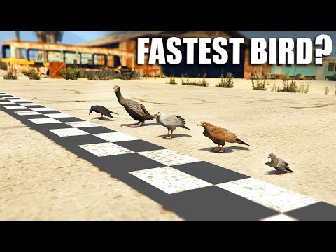 GTA V - Which is the Fastest Bird?