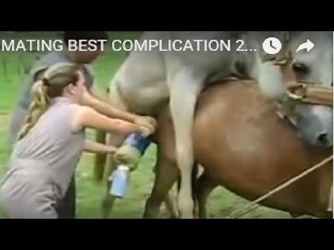 Xxx Mp4 NEW HORSE MATING BEST COMPLICATION 2016 3gp Sex
