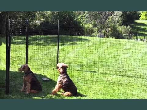 Dog Fence Ideas | Picture Collection Ideas Of Fences For Outdoor Pets