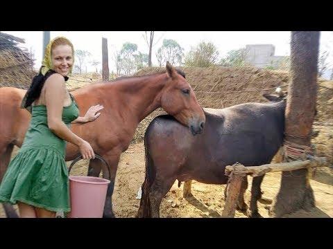 Xxx Mp4 Buffalo And Horse Meeting 3gp Sex