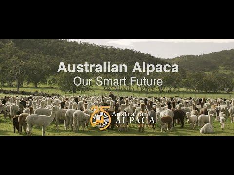 Why Alpaca is the Smart Future for Australia