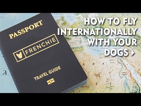 How to Fly Internationally with Your Dogs
