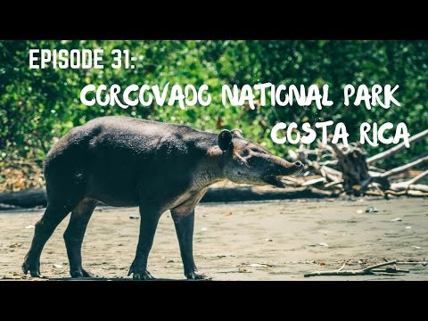 Hiking and wildlife in Corcovado National Park, Osa Peninsula, Costa Rica
