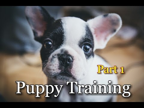 Puppy Training  (Part 1)