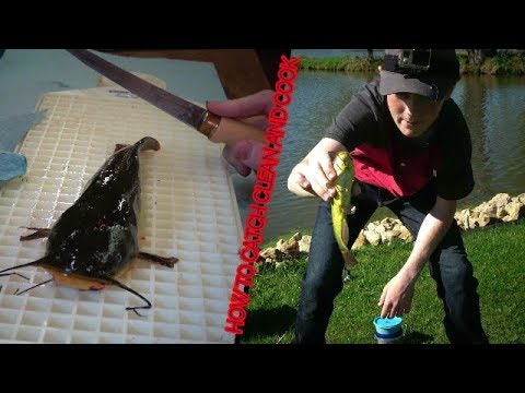 Bullhead catfish. HOW TO catch,  clean, and cook