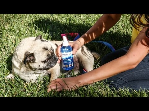 Vetericyn Plus Wound and Skin Care for Dogs