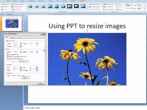 How to crop and resize an image using PowerPoint.