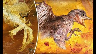 100 MILLION Year Old BABY BIRD Found Trapped In Amber