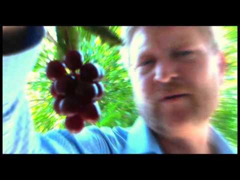 Wild Choke Cherry Delight