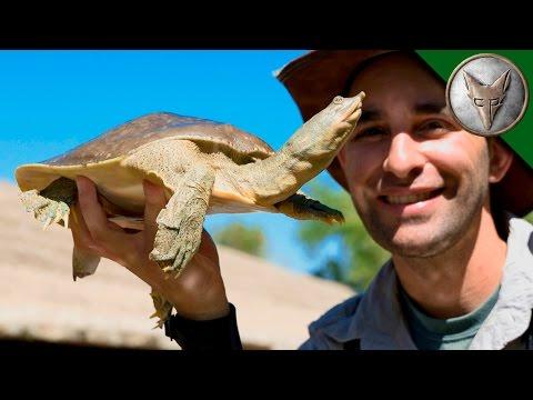 Bizarre Desert Turtle?!