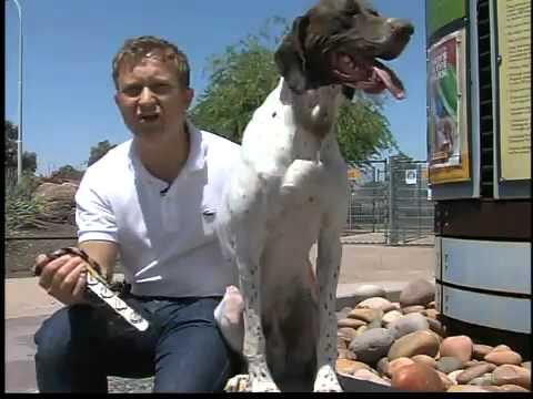 Man offering Israeli dog training in Valley