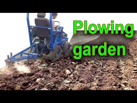 Plowing the garden. Two Bottom Plow