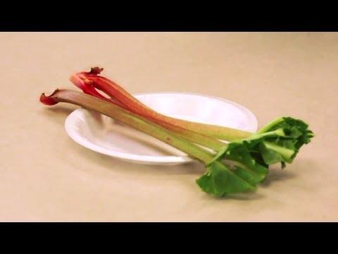 Preparing Rhubarb for Exhibition