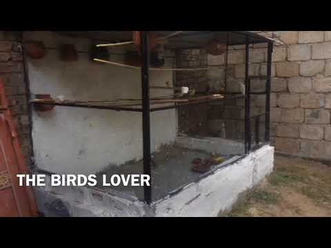 How to make a colony for birds part -2- video # 05