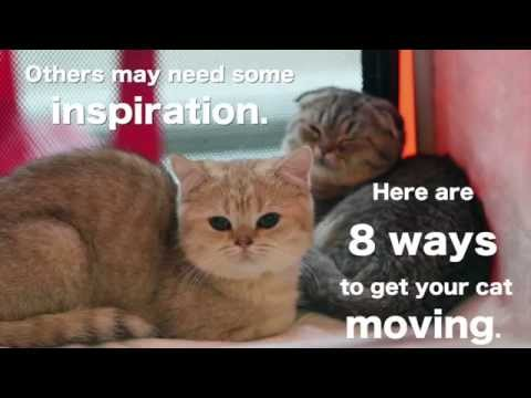 8 Clever Ideas to Keep Cats Active