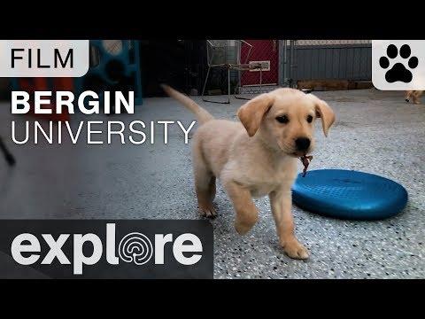 Bergin University of Canine Studies - Film