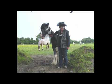 Horse Clicker Training 'Head Down'