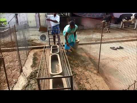 A Simple Goat Farm Part- I